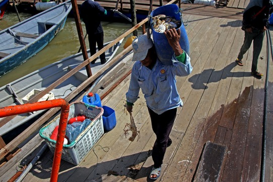 A man brought back prawns and crabs results from a good luck marine fisheries in the sea in Kampung Pendas,Gelang Patah,Johor on March 12,2015.-The Malaysian Insider pic by Seth Akmal